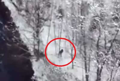 Bigfoot Footage Oregon