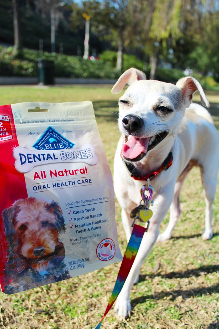 Blue Buffalo Dental Bones Review - Chewy.com