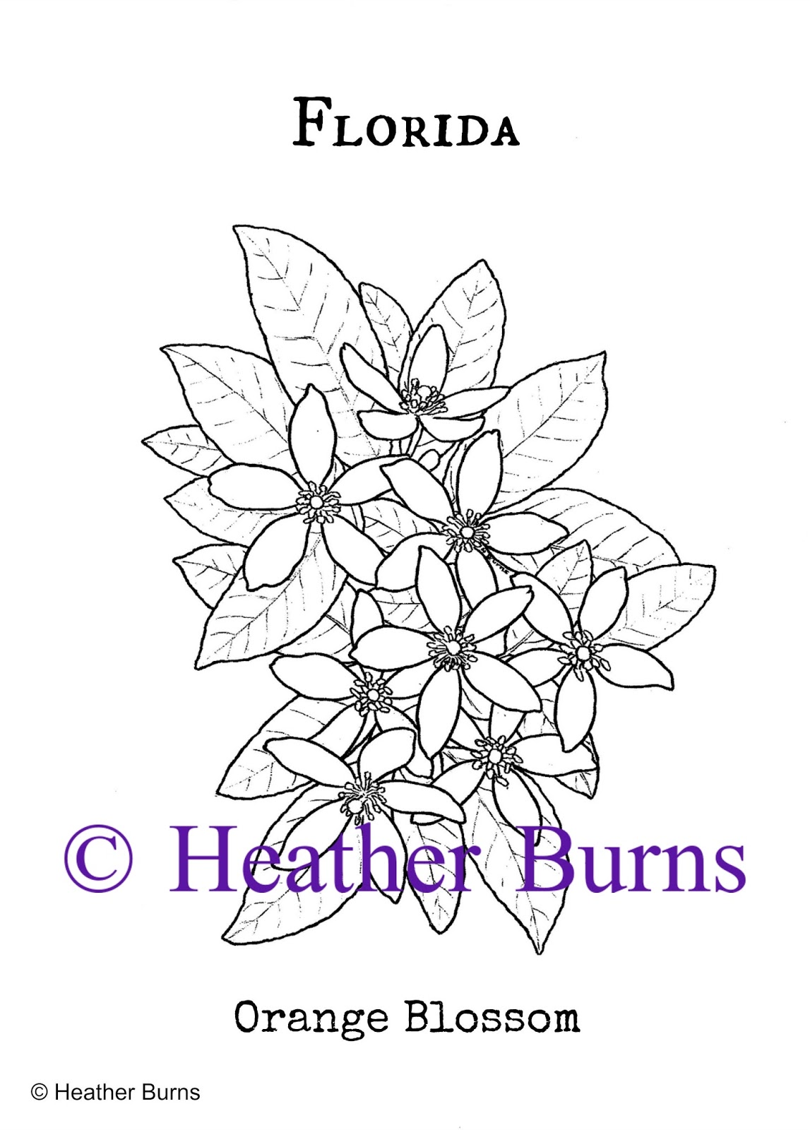 Orange blossom flower coloring page murderthestout for Florida state symbols coloring pages