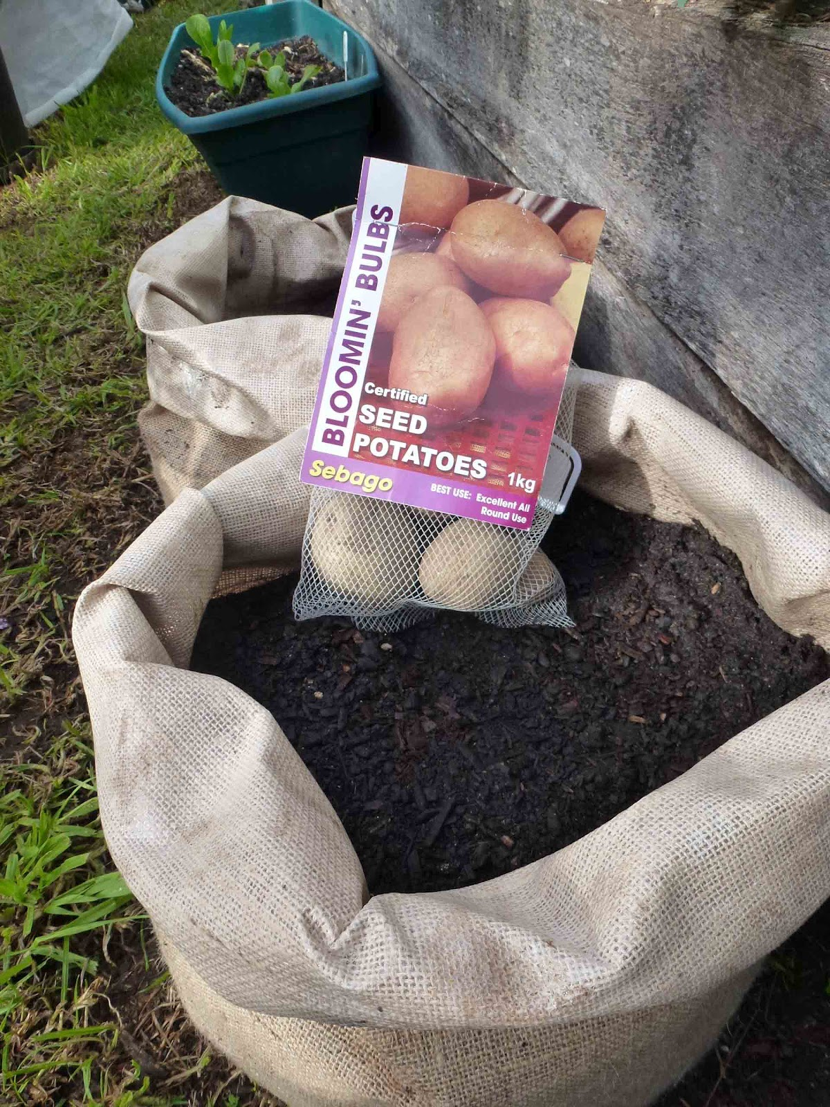 Home Design Stores Adelaide Start To Grow Growing Potatoes In Sacks