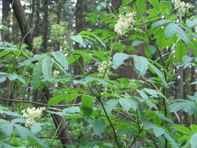 Natural Remedies Native Americans Used To Treat Asthma And Inflammation