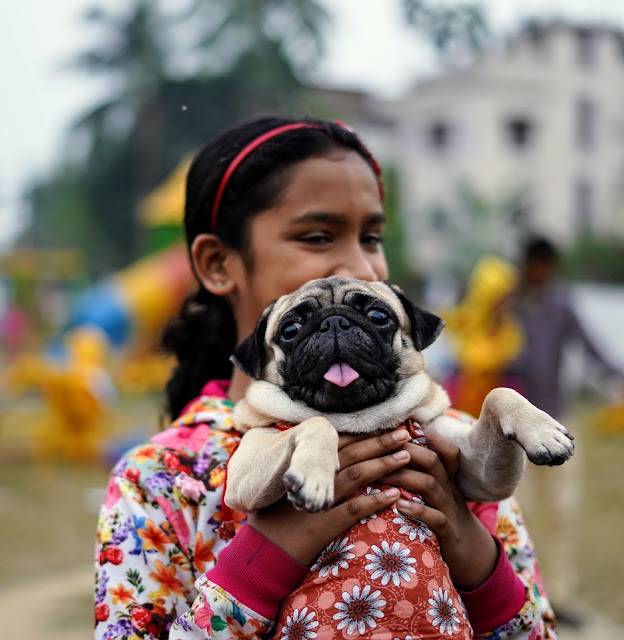 Pug Captured By Sourajit Saha 4