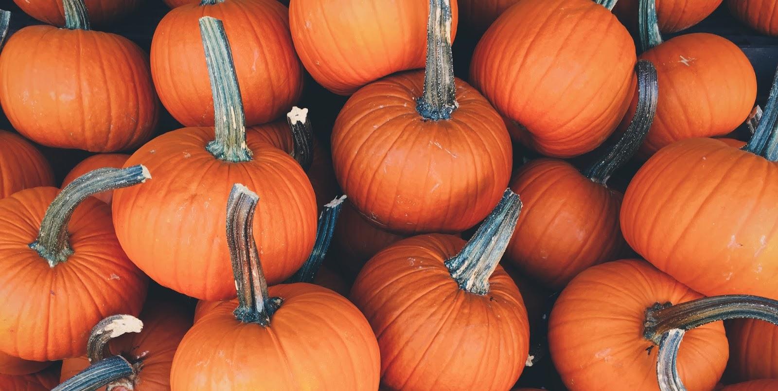 pumpkin decorating ideas no carving halloween amazing