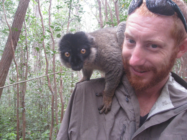 me brown lemur andasibe