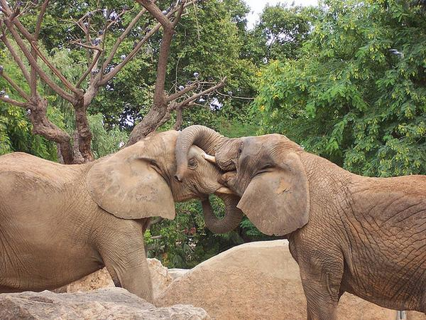 Chào đón năm mới với 15 nụ hôn dễ thương của các loài động vật