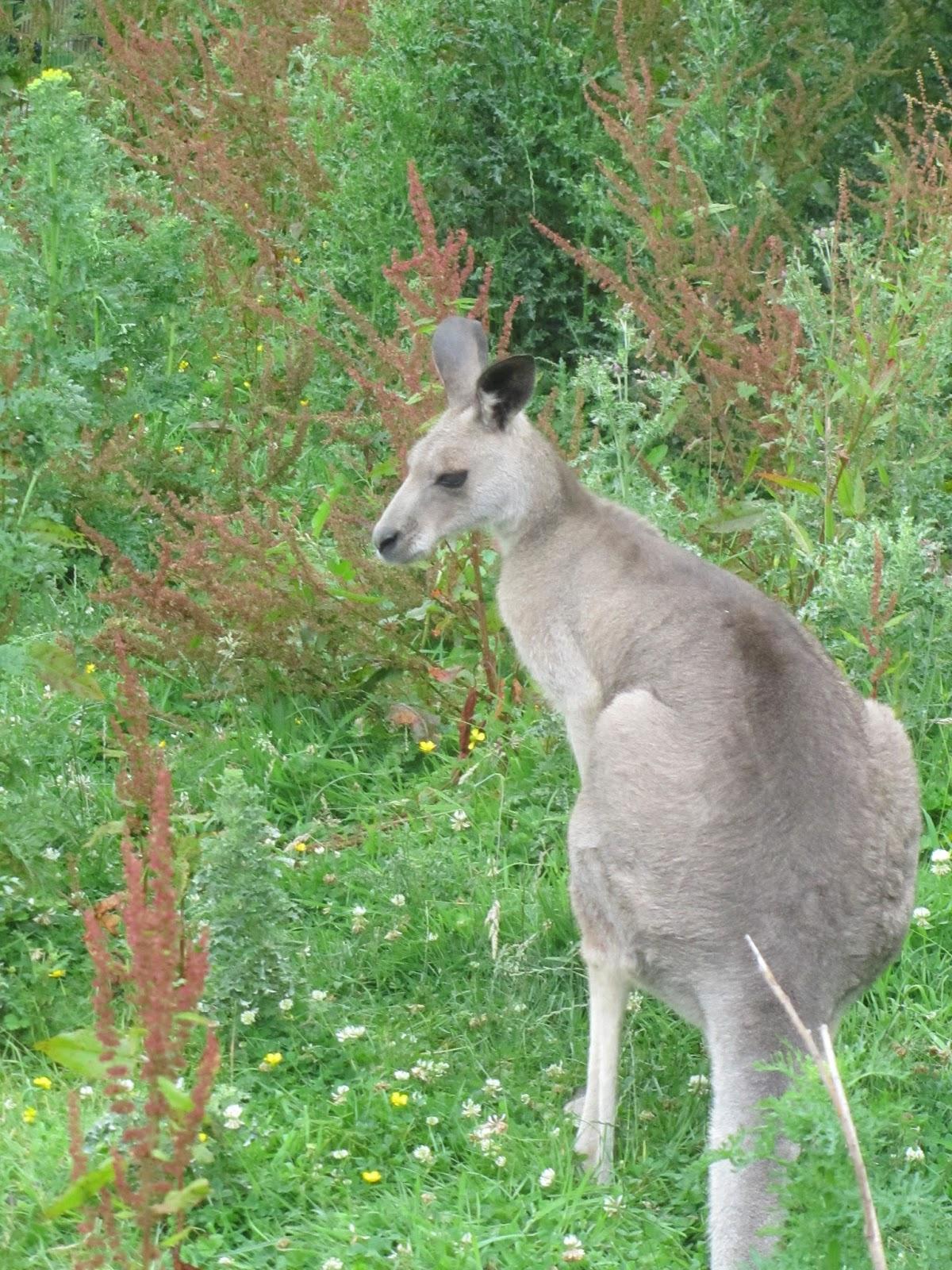 expat with kids in dublin visiting fota wildlife park co cork