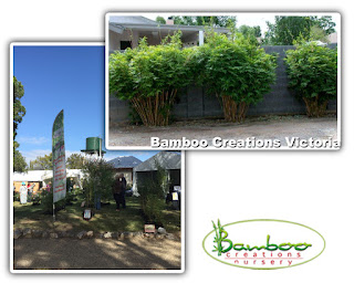 Bamboo creations victoria taking alphonse karr bamboo to lanyon plant fair in canberra