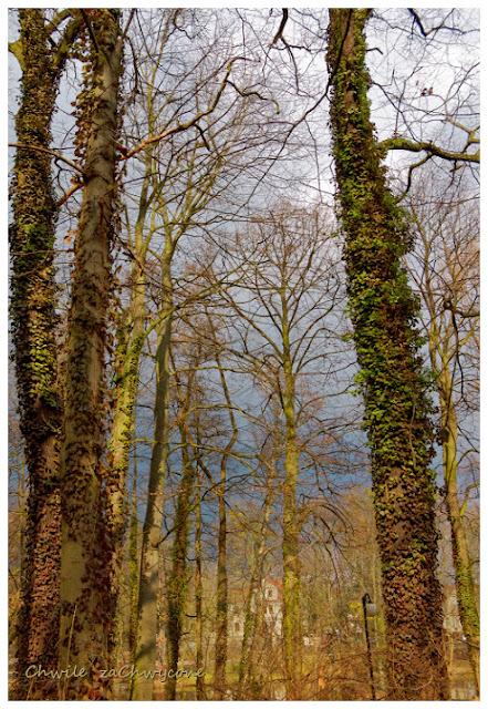 Park Sołacki w Poznaniu, drzewa w parku