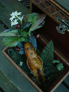ماندراكورا: النبتة التي تصرخ وتقتل من يسمعها