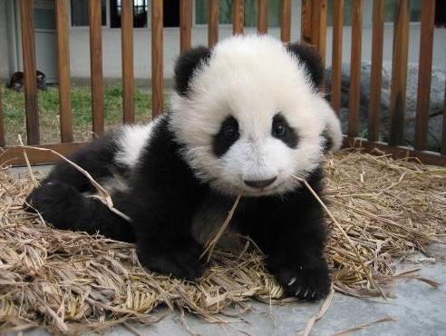 3d Wallpapers For Nokia E63 Cool Images Cute Panda Pics