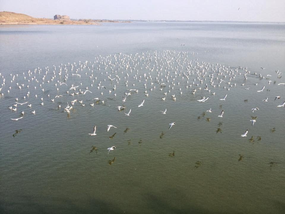 wow great image of flamingo birds
