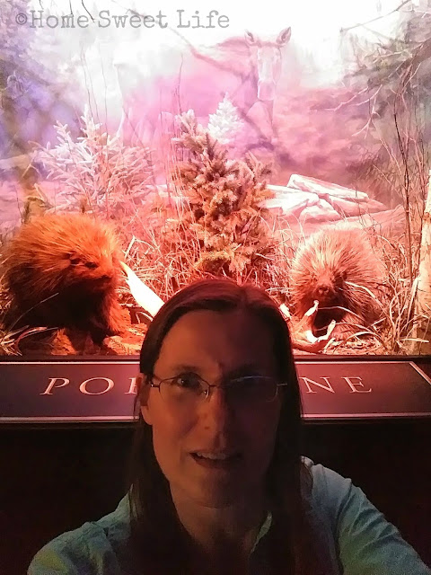 Wonders of Wildlife, Johnny Morris, Wildlife Galleries, Springfield MO, road trip, family trip, Bass Pro Shops, porcupine