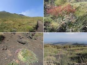 la vegetazione lungo il sentiero schiena dell'asino