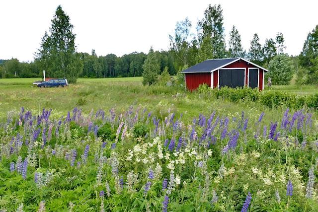 Volvo, Haus, Schwedenhaus, Schwedenhäuschen, Garten, Lupinen