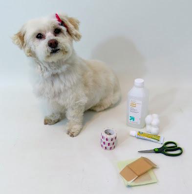 Pet health insurance, Dog health insurance, Consumersadvocate report on pet insurance,  Dog Health , Cats, Dogs