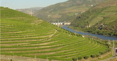 Qu'est-ce que le vin de Porto Douro Beaux-Vins