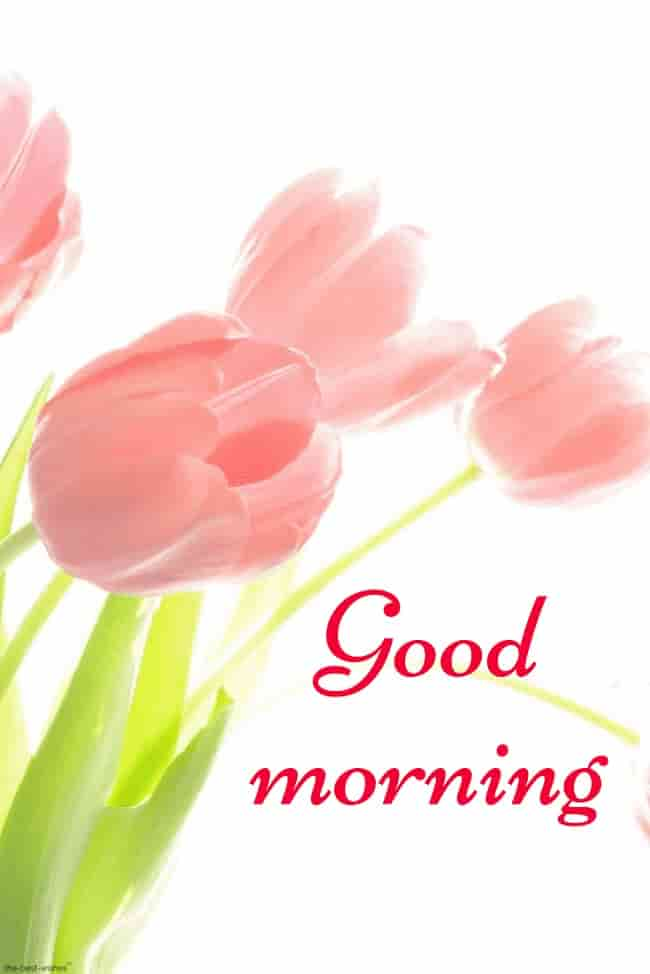 good morning flower images hd