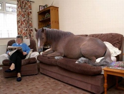 i have seen the whole of the internet horse on its sofa rh joannecasey blogspot com sofa with seat belts sofa with heat and massage