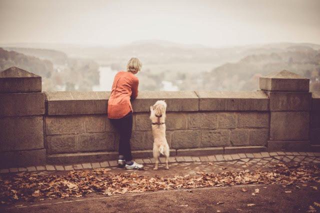 Fotoshotting Hund Hohenstein Witten Herbst Ruhr Ruhrgebiet