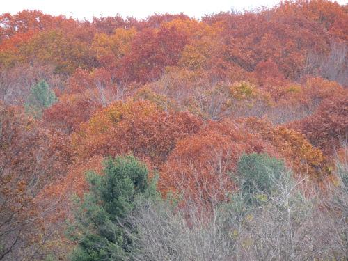 autumn oak on hill