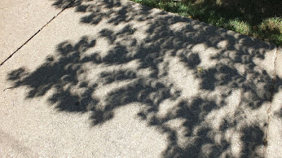 Eclipse through leaves in Erie by L Bolla