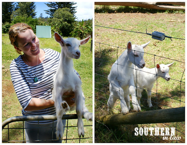 Emily Ryves from Norfolk Island's Hilli Goat