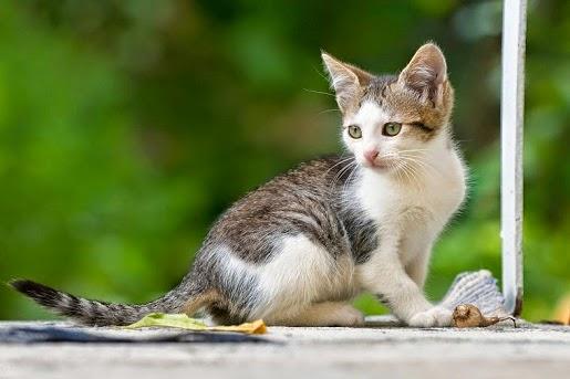 Jak poskromić niegrzecznego kota