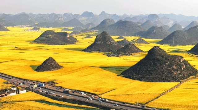 Campos de canola de Luoping – China