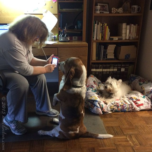 Bentley Basset & me looking at iPhone