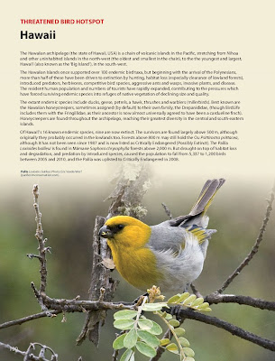 Hawaiian Birdlife
