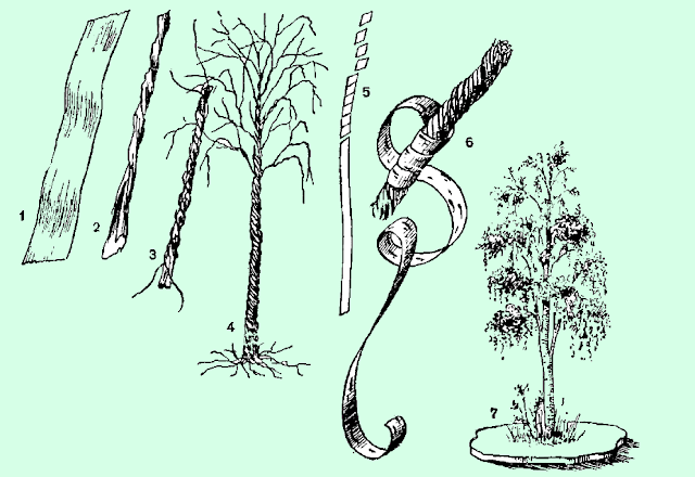 Делаем дерево