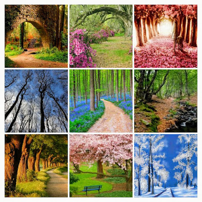bosques, collage, imagenes de bosques, el bosque