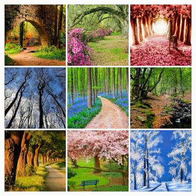 bosques, collage, imagenes de bosques, el bosque