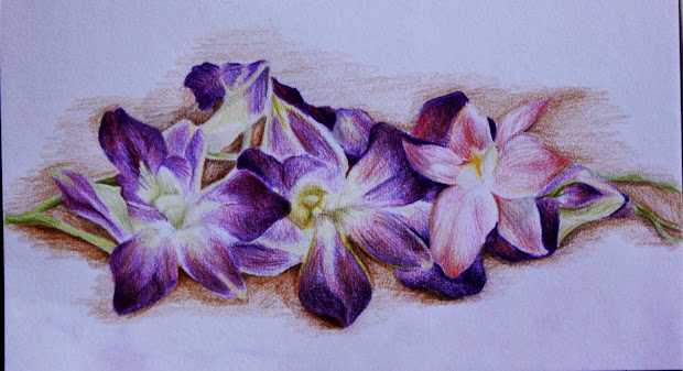 Orchid Flower Drawing In Pencil Wallpapers
