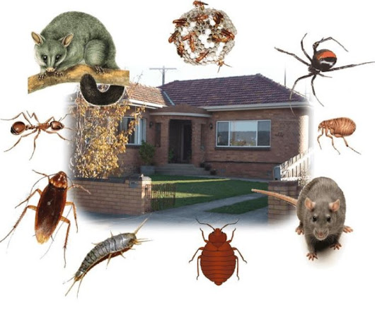 Apartment Living: How To Get the Pest Control Done?