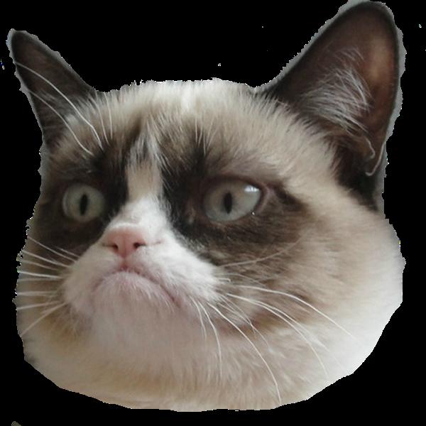 grumpy cat edtechchris.com edtech edtechteacher