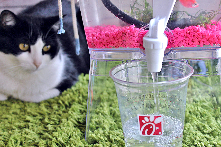 Transform everyday trash into feline wonder! Check out this tutorial for a DIY (kinda hydroponic) Upcycles Cat Grass Fish Tank, and our DIY Catnip Marinator + Cat Toy made with fast food trays! #ChickFilAMomsDIY (Sponsored)