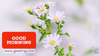 Nature Good  morning greetings on cool white colour flowers image