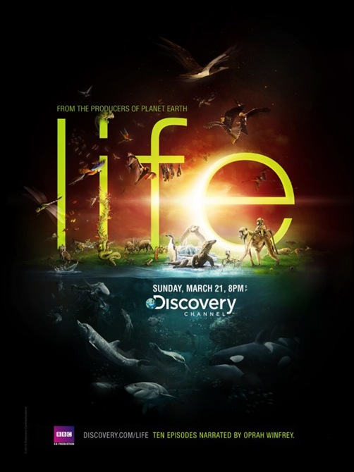 Mẫu in tờ rơi quảng cáo lạ mắt ấn tượng, Life Discovery