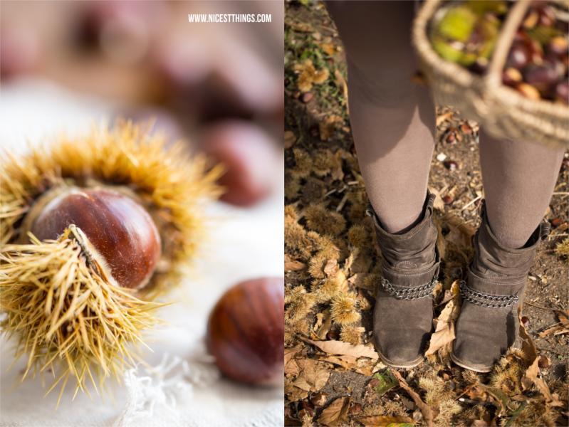 Esskastanien Maronen sammeln im Wald für Maronencreme Kastaniencreme Rezept