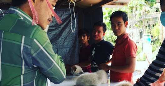 How to improve animal welfare in Siem Reap with market thinking