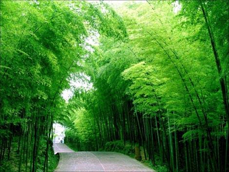 Hutan Buluh Shunan (Shunan Zhuhai)