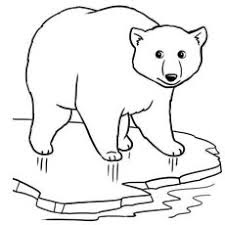 Polar Bear Images For Coloring Pages
