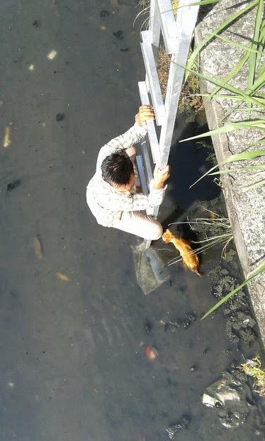 Selamatkan Kucing Jatuh Parit, Mawi Dipuji Netizen