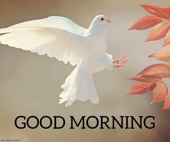 good morning images with peace bird