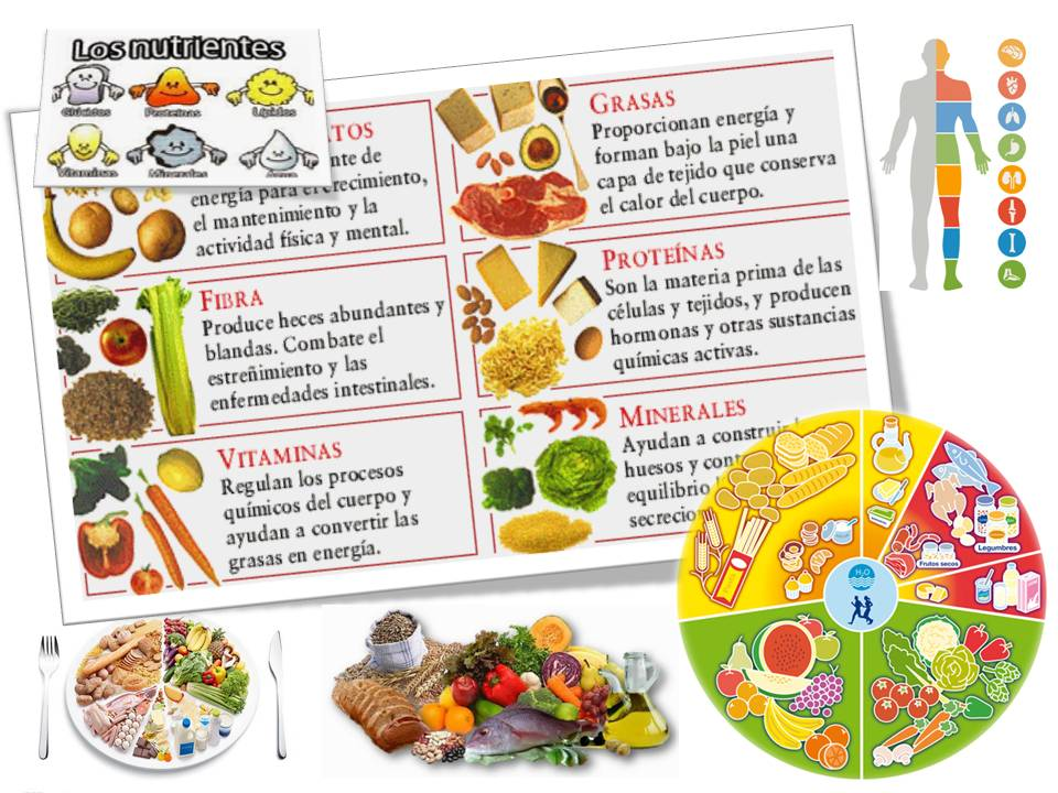 Video de Los Alimentos Funcionales Youtube