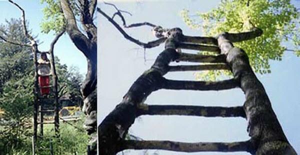 Unusual Trees Around The World Ladies Mails