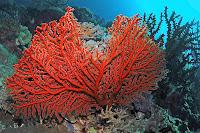 Bir ağaç şeklindeki kırmızı renkli mercan resifi