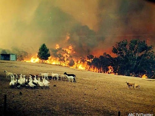 South_Australia_Wildfire_recent_natural_disaster