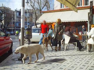 Αποτέλεσμα εικόνας για αδέσποτα σκυλιά Έδεσσα